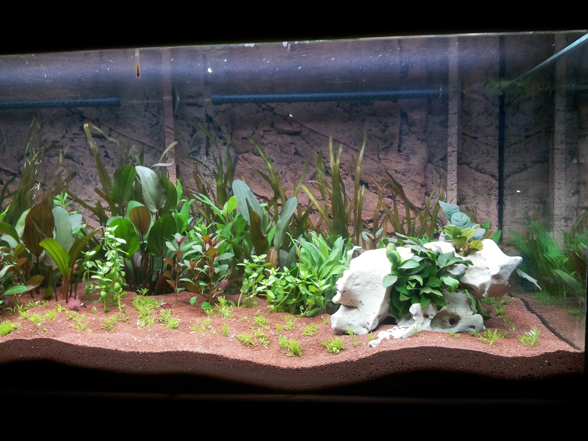 Aquarium with plants