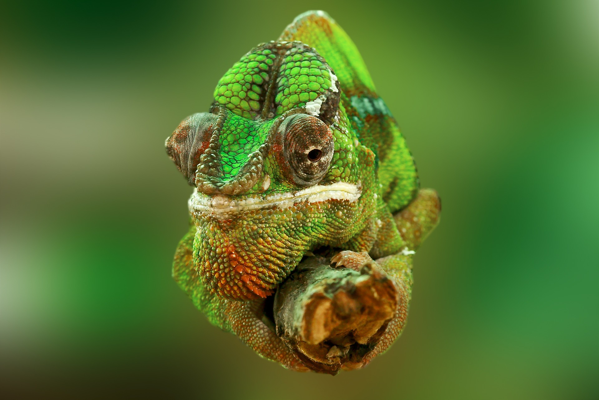 Photo of chameleon on branch