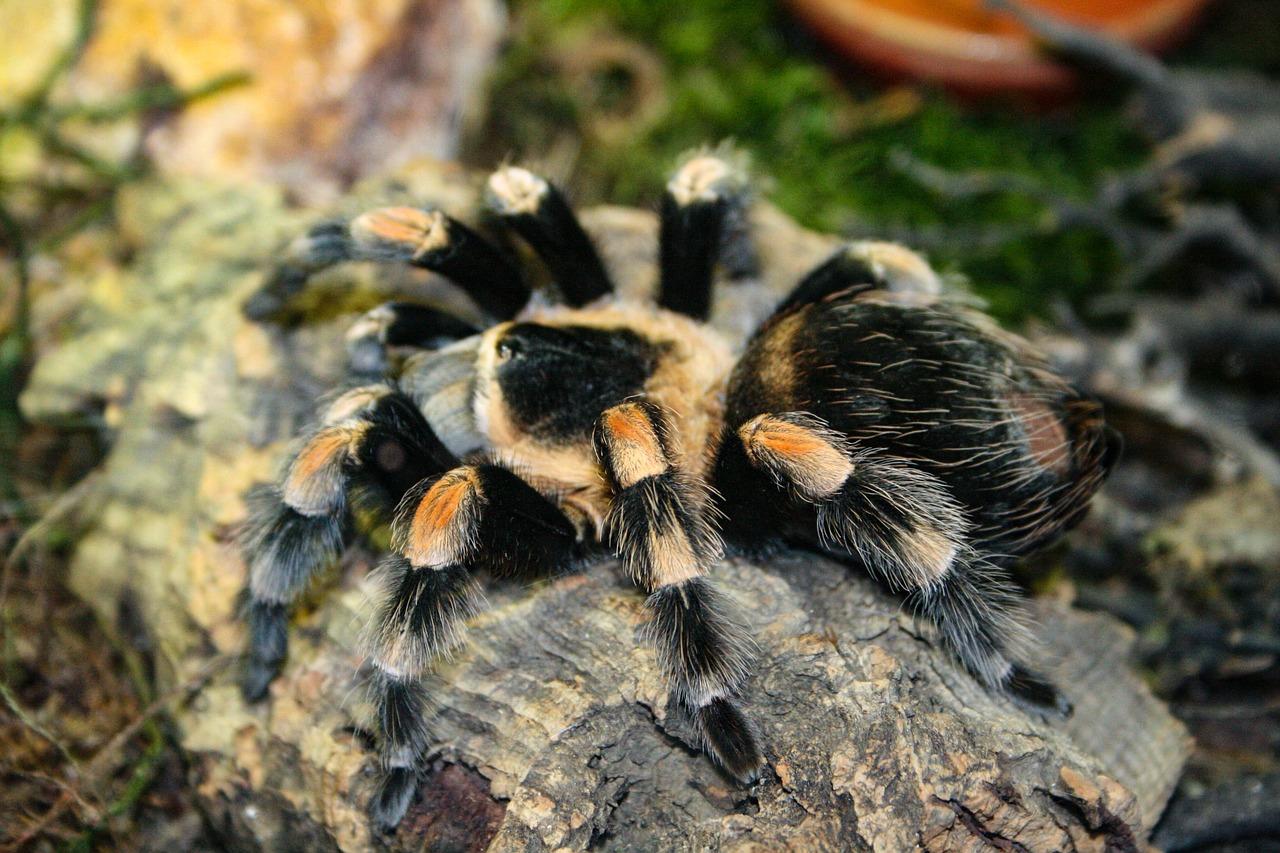 Why Won T My Tarantula Eat The Tye Dyed Iguana Indoor