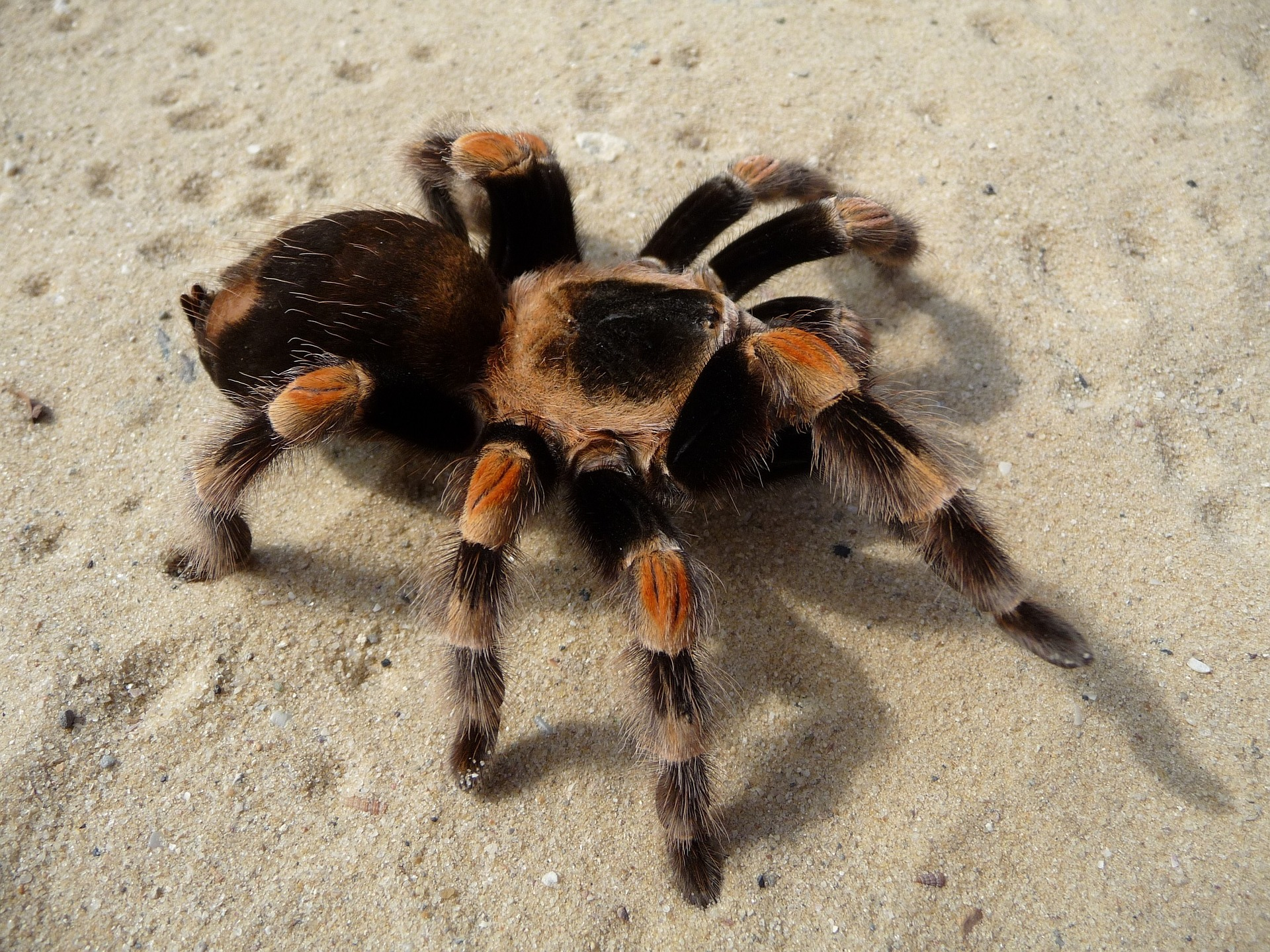 Photo of tarantula on sand
