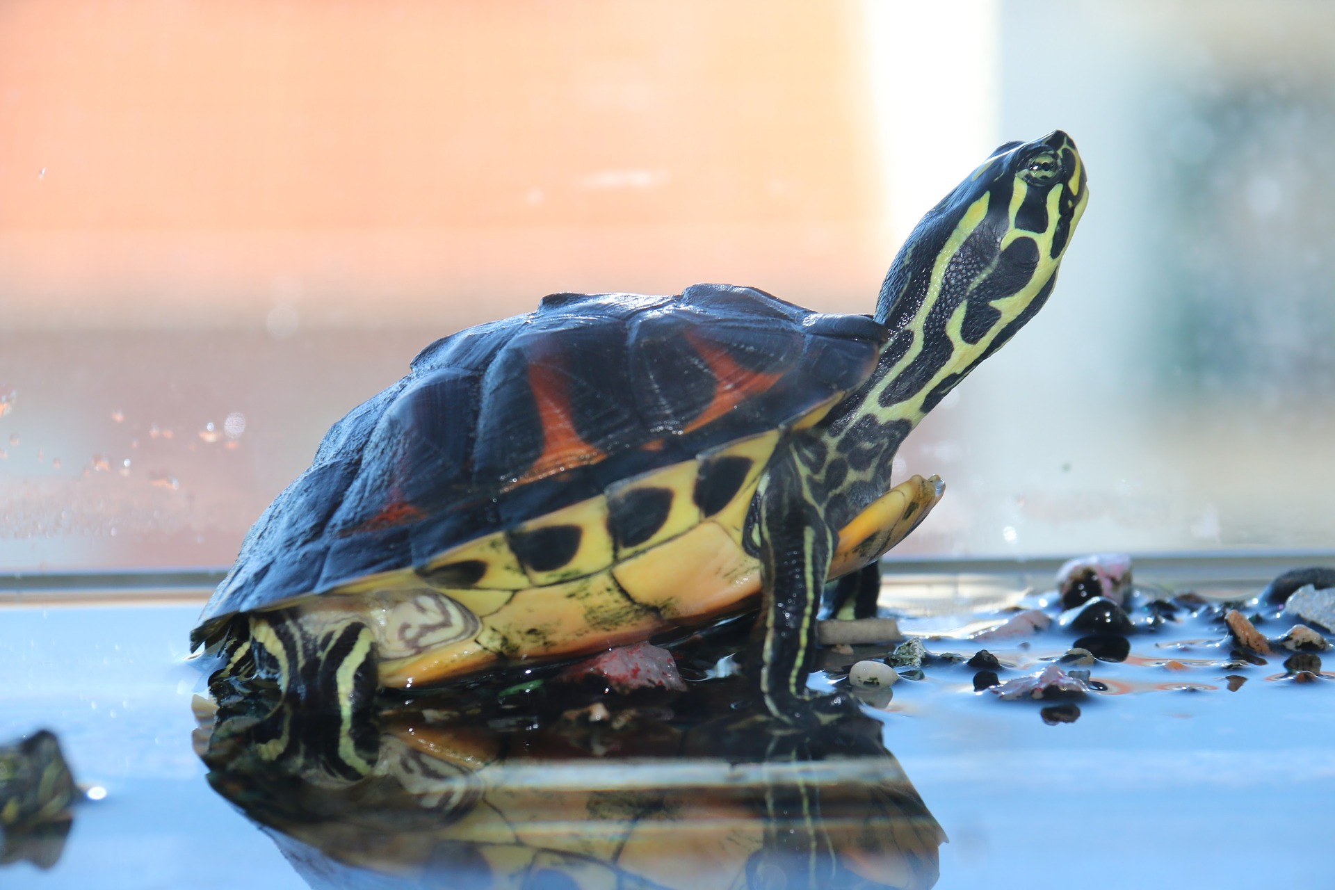 An Aquascape Guide For Turtle Tanks The Tye Dyed Iguana Reptiles And Reptile Supplies In St Louis