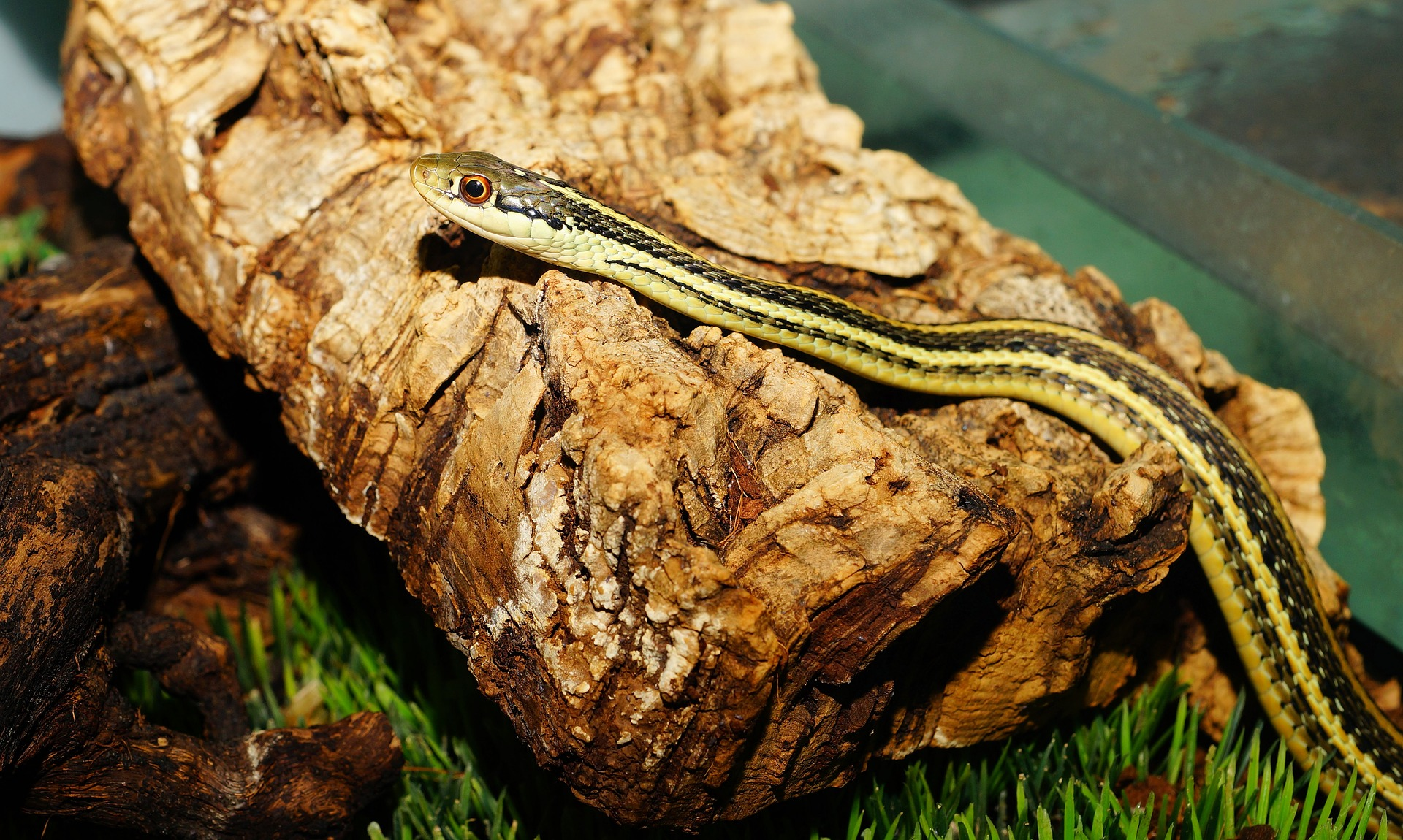 4 Snakes That Don T Eat Rodents The Tye Dyed Iguana Reptiles And Reptile Supplies In St Louis